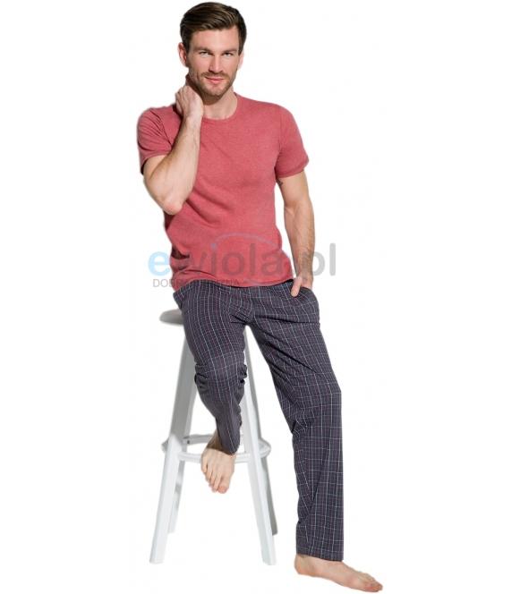 Piżama męska bawełniana firmy taro model Jeremi 2199 koszylka w kolorze bordo krótki rękaw spodnie granatowe w modną krate